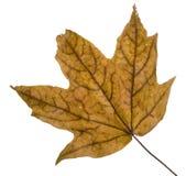 листья падения дня ненастные Стоковое Изображение