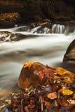 листья падения заводи стоковые фотографии rf