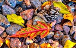 Листья падения, конусы сосны и камни стоковая фотография