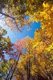 Листья падения на высокорослых валах Стоковая Фотография