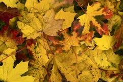 листья падения осени Стоковые Изображения