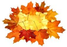 листья падения осени Стоковые Фотографии RF