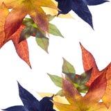 листья падения осени Стоковое Изображение