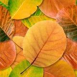 листья падения предпосылки безшовные Стоковые Фото