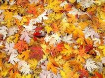 листья падения предпосылки Стоковое Изображение RF