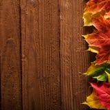 листья падения предпосылки Стоковая Фотография