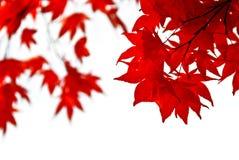 листья падения предпосылки Стоковая Фотография RF