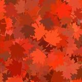 листья падения представили Стоковые Фото