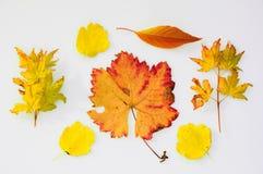 листья падения собрания Стоковые Изображения
