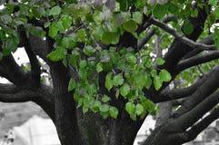 Листья падения с шикарной предпосылкой стоковая фотография rf