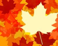 листья падения цвета Стоковое Изображение RF