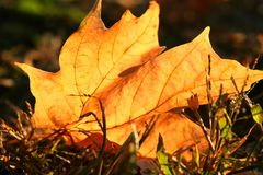 Листья падения Стоковые Изображения