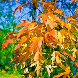 листья падения Стоковое Изображение RF