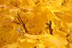 листья падения стоковые фото
