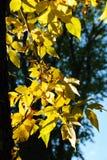 листья падения Стоковая Фотография RF
