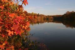 листья падения Стоковое Фото