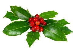 листья падуба украшения рождества ягод Стоковые Фото