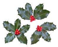 листья падуба ягод Стоковая Фотография