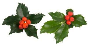листья падуба стоковое изображение rf