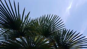 Листья пальмы Стоковое Фото
