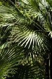 Листья пальмы стоковое фото rf