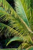 Листья пальмы Стоковые Фото