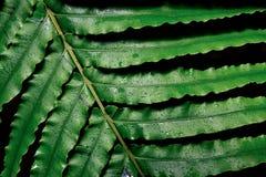 листья папоротника большие Стоковое Фото