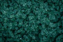 Листья папоротника в саде стоковая фотография rf