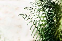 Листья папоротника на запачканной предпосылке природы стоковые фото