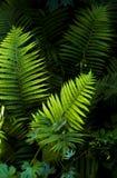 Листья папоротника на темной предпосылке Стоковые Фотографии RF