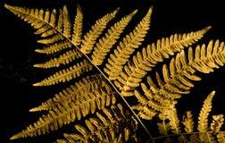 листья папоротника осени Стоковая Фотография RF