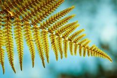 листья папоротника показывая споры Стоковое Изображение RF