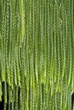 листья папоротника предпосылки Стоковое Изображение