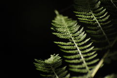 Листья папоротников выделили солнце Лес Стоковое фото RF