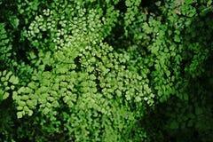 Листья папоротников Стоковое Изображение RF