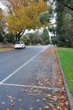 листья паркуя улицу Стоковое Фото