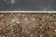 Листья падали Стоковые Фотографии RF