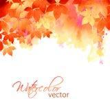 Листья падения акварели вектора осени Стоковое фото RF