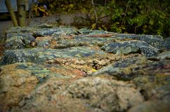 Листья падения в горе КОЛОРАДО Стоковые Изображения RF