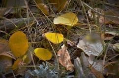 Листья падения в горе КОЛОРАДО Стоковая Фотография RF