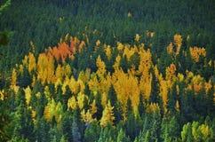 Листья падения в горе КОЛОРАДО Стоковые Фотографии RF