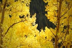 Листья падения в горе КОЛОРАДО Стоковое Изображение RF