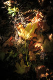 Листья падения в солнечном свете Стоковая Фотография
