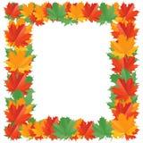 листья падения граници Стоковые Изображения