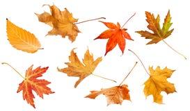 Листья падения изолированные на белом коллаже предпосылки стоковое изображение rf