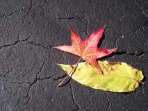 Листья падения кладя на землю Стоковое Изображение RF