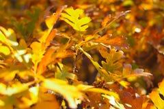 Листья падения на ветвях Стоковое Изображение RF