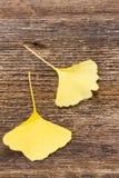 Листья падения на деревянной предпосылке Стоковое Изображение