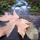 Листья падения на мосте Стоковое Изображение