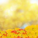 Листья падения на предпосылке bokeh Стоковые Фото